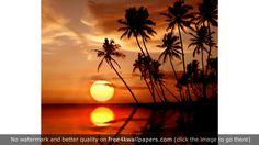 Tropical Sunset S wallpaper Tropical Wallpaper, Sunset Wallpaper, Photo Wallpaper, Nature Wallpaper, Wallpaper Backgrounds, Ocean Sunset, Summer Sunset, Sunset Pics, Sri Lanka