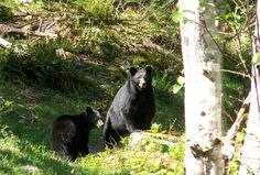 Hope we never encounter any if these little fellows st our home away from home. Olympic Peninsula