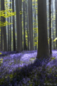 """""""Violet"""" by Wil Mijer on 500px"""