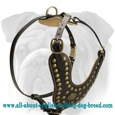 Royal #Studded #Leather #Harness for #English #Bulldog $149.00 | www.all-about-english-bulldog-dog-breed.com