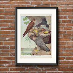 Nature Prints, Bird Prints, Vintage Birds, Vintage Prints, Original Copy, Vibrant Colors, Colours, Birds Of America, Old Paper