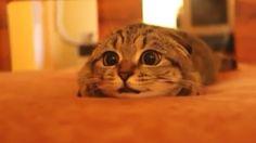「ホラー映画を見ている猫ちゃん…怖がりっぷりが超カワイイ♡」に含まれる1目の画像   ねこっぷる