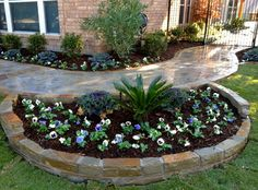 Fall landscaping with pansies and ornamental cabbage. Sago palm, oleander as part of permanent plantings.