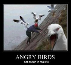 angry birds-not so fun in real life