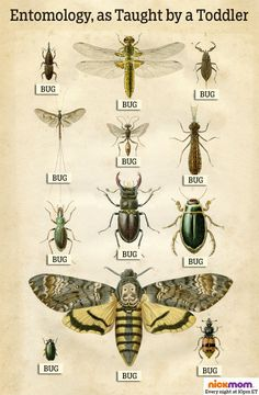 Entomology, as Taught by a Toddler | More LOLs & Funny Stuff for Moms | NickMom
