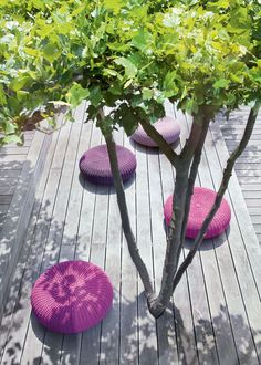 pave or deck below ornamental tree so that it's easy to sweep up leaves and or blossom that drop and stop grass getting muddy from walking around.