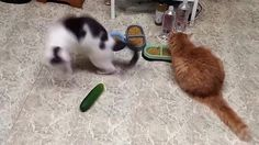 Cucumbers sure are scary https://www.facebook.com/TheThingscom/videos/820377708074075/