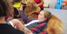 Un perro es el milagro de un niño en recuperación, asombroso! :http://saludyeducacionintegral.com/un-perro-es-el-milagro-de-un-nino-en-recuperacion/