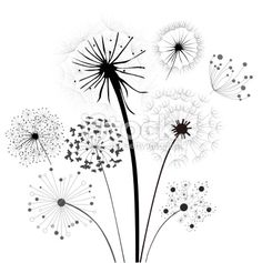 Dandelion Collection royalty-free dandelion collection stock vector art & more images of backgrounds Pictures For Sale, Pictures To Paint, Art Pictures, Illustrations, Illustration Art, Dandelion Pictures, Creative Mind Map, Bullet Journal Hand Lettering, Floral Drawing