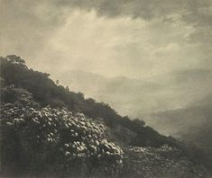 Harold Cazneaux, Mountain flowers. 1922