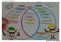 Mitosis vs Meiosis by Common Core Materials Más Mitosis Vs Meiosis, Cell Biology, Ap Biology, Science Cells, Science Experiments, Science Ideas, Biology For Kids, Teach Like A Champion