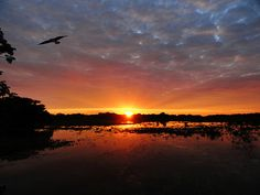 Parque Nacional do Pantanal Matogrossense – MT