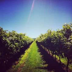 The Good Earth Winery, Ontario. I can't believe I haven't went to a winery yet.