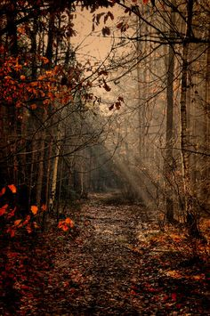 28 Ideas for nature photography autumn hello october Beautiful World, Beautiful Places, Beautiful Pictures, Beautiful Nature Scenes, Autumn Aesthetic, Walk In The Woods, Belle Photo, Autumn Leaves, Autumn Nature