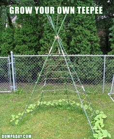Teepee- could modify sunflower house to this teepee frame. I want to do this for my peas next year.