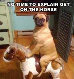 here are some adorable mug shots of adorable pugs. we accept photos of your pugs. pugs in costumes. pugs in cartoon. pugs in videos. pugs in love. mug pug. Funny Dog Memes, Funny Animal Memes, Funny Shit, Funny Dogs, Cute Dogs, Funny Animals, Cute Animals, Funny Puppies, Animal Humor