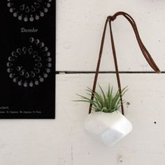 The Colossal Shop — Hanging Faceted Porcelain Air Plant Holder