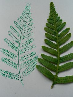 Fern Prints With Ink by HarmonyArtMom,