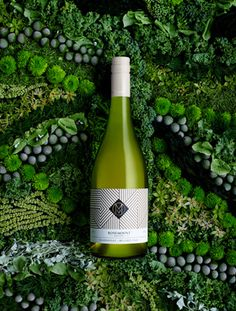 soniarentsch Wine Bottle Design, Wine Label Design, Wine Bottle Labels, Sauvignon Blanc, Cabernet Sauvignon, Chenin Blanc, Pinot Noir, Wine Advertising, Wine Poster