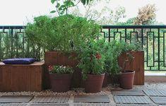 A varanda com jeito de jardim é exatamente o que a moradora deste apartamento queria: aconchegante, com plantas e temperos frescos sempre à mão.