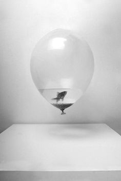 Fish in a ballon Surrealism Photography, Art Photography, Poster Design, User Experience Design, Blender 3d, Photoshop Tutorial, Surreal Art, Goldfish, Photo Manipulation