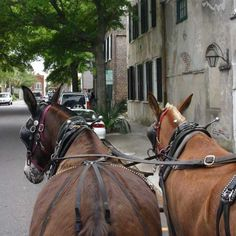 Horse-drawn carriage rides are just one fun way to explore historic Charleston. As if Charleston isn't fun enough, they offer you carriage rides, too.