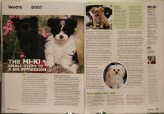 Mi-ki puppies for sale, Always Adorable Mi-kis, toy breed puppies Magazine Articles, Gremlins, Puppies For Sale, History, Cats, Animals, Toy, Google Search, Gatos