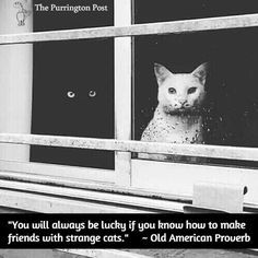 you will always be lucky if you know how to make friends with strange cats... :)