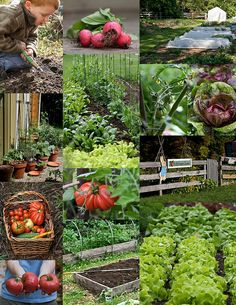 Edible Garden collage