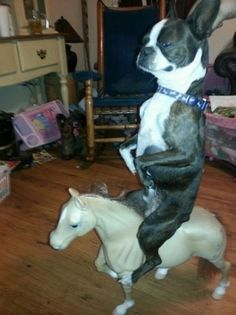 Whatever is happening here. | The 40 Most WTF Animal Pics Of 2013