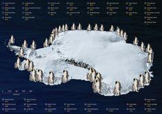 penguins in antarctica - Google Search