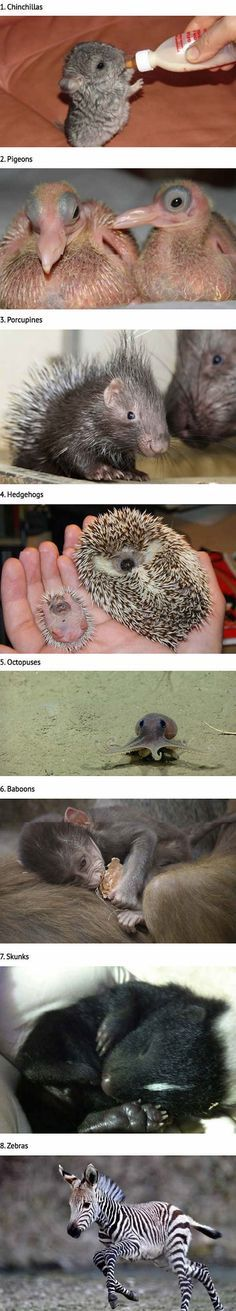 20 Animals That You've Probably Never Seen As Babies