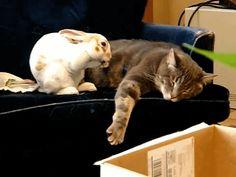 Bunny falls asleep