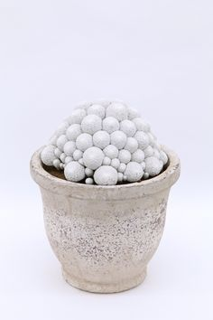 Mammillaria herrerae - white cactus