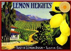 Tustin Orange County Lemon Heights Lemon Citrus Fruit Crate Label Art Print #LemonHeights