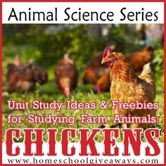 Unit Study Ideas and Freebies for Studying Farm Animals ~ Chickens!