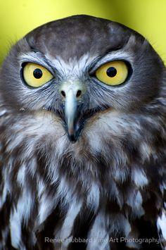 """Barking Owl"" by Renee Hubbard"