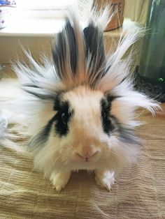 Bad Hair Day...she's electrifying!  Gotta love Bella!