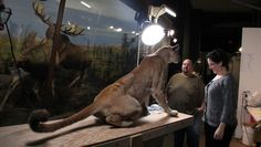 Behind the Glass: Restoration at the Natural History Museum's Dioramas
