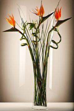 BAMBOO  BIRDS OF PARADISE (Arrangements) | KINGDOM OF FLOWERS