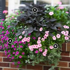 A: Superbells Trailing Rose Calibrachoa -- 2    B: Supertunia Vista Bubblegum Petunia -- 1    C: Sweet potato vine (Ipomoea batatas 'Blackie') -- 1