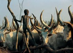 Photographers Carol Beckwith and Angela Fisher spent over 30 years taking photos of ceremonies, rituals and the daily life of African tribal peoples. These extraordinary images tell the story of the Dinka tribe in Sudan. African Tribes, African Art, African Animals, Zoo 2, Culture Art, Tribal People, Tier Fotos, African Culture, People Of The World