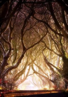 foret de lumière d'automne -  artiste inconnu ... à chercher
