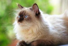 Trasladar gato a nuevo entorno.hay miles como ellos, docta uno y salva una transcendencia.