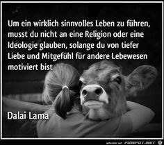 a picture for the heart 'A meaningful life.jpg' by Floh. One of 9891 files … - Vegetarier Wisdom Quotes, Words Quotes, Life Quotes, Sayings, Quotes Quotes, Osho, William Shakespeare, Vegan Quotes, Funny Animal Quotes