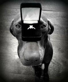 My  Proposal  www.nelleandlizzy.com
