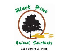 Black Pine Animal Sanctuary provides refuge to nearly 90 displaced, captive-raised exotic animals for the rest of their lives!