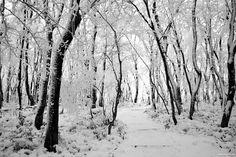 Winter in Jeju Island, Korea