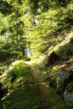 Durch tiefsten Schwarzwälder Urwald, mit Gämsenhalden, durch das Schwarzatal, vorbei am Kuchelfelsen und über den Rappenfelsen führt der Weg an zahlreichen A...