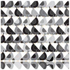 Pigeons and BlackBird. Illustration by Jim Field...
